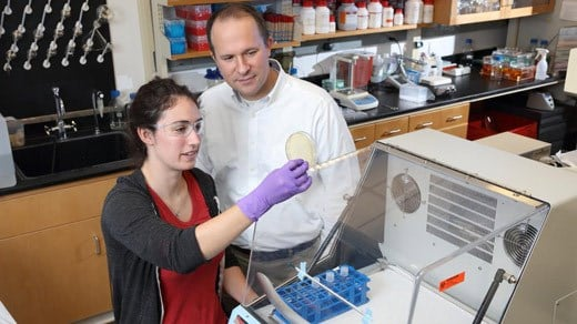 Jason Papin, a professor of biomedical engineering and principal investigator for the grant, works with Laura Dunphy, a first-year PhD student in biomedical engineering training in the Papin lab. (Photo by Tom Cogill)