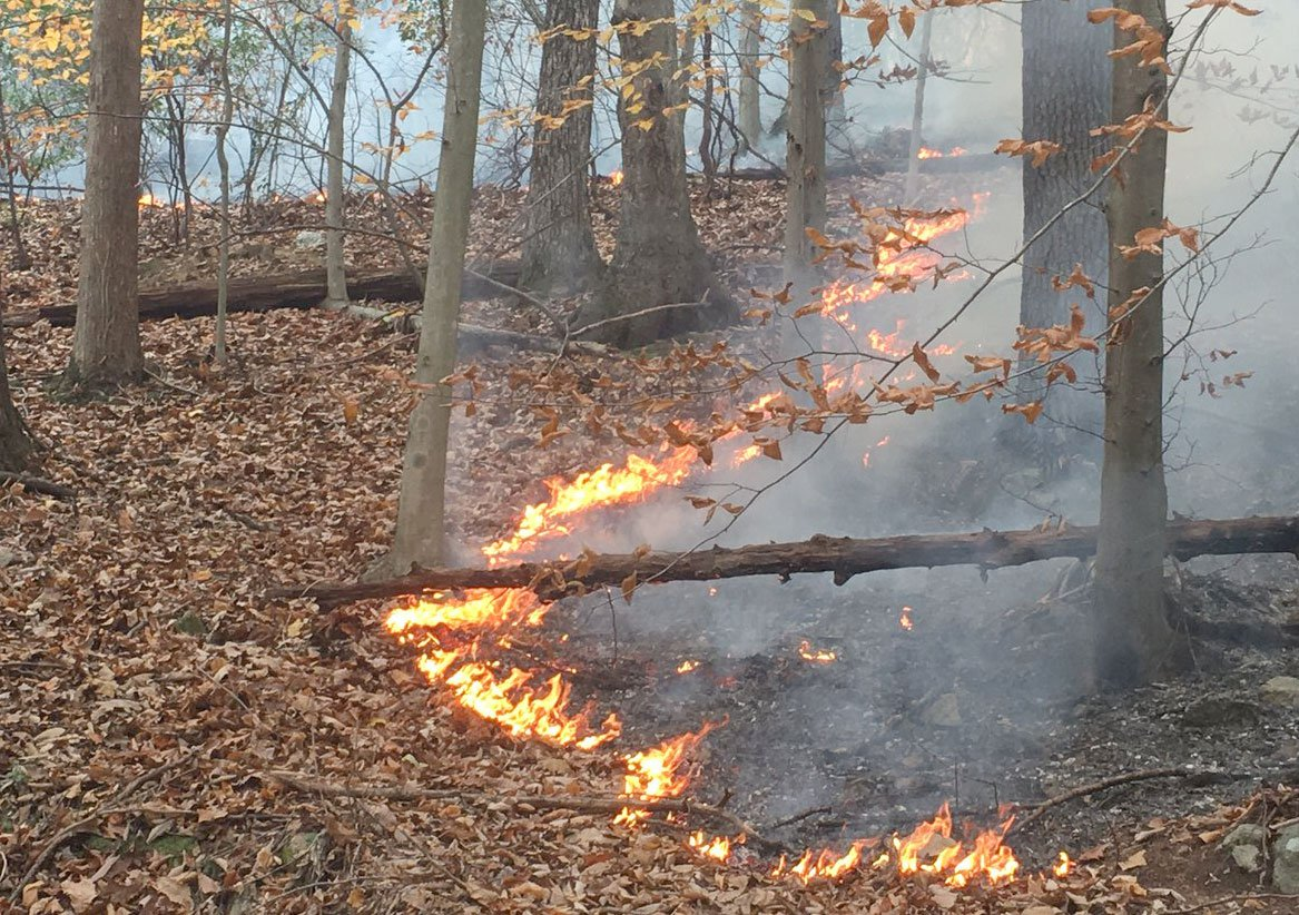 Eades Hollow Fire courtesy of Forestry Department