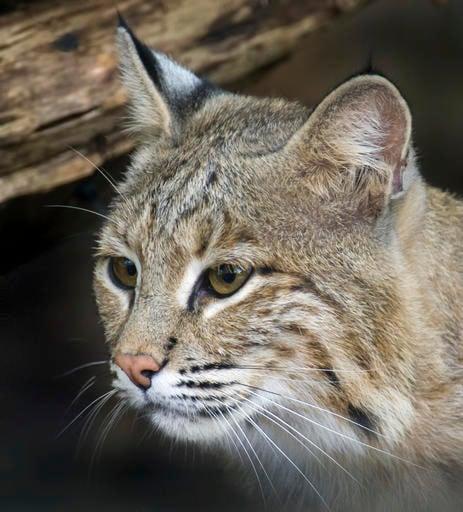 Photo courtesy of the National Zoo