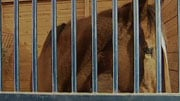 Seven horses are still in need of adoption.