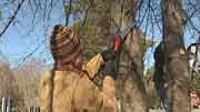 Tree stewards prune trees in Scottsville Tuesday.