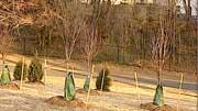 The city will plant around 200 saplings.