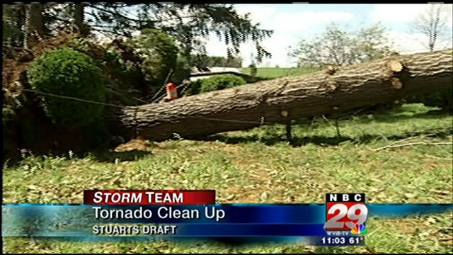One woman's 60 year old cherry tree is now on its side.