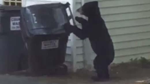 Black bear spotted near the University of Virginia Wednesday (Photo from Ross Harding)