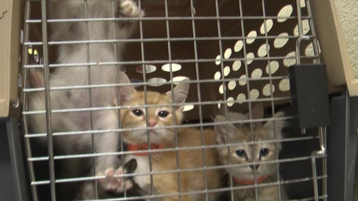 Cats from Houston will soon be up for adoption