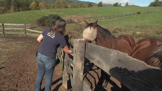 Horses that were rescued from Peaceable Farm