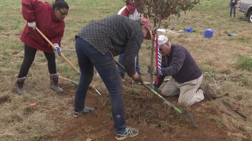 Many people came out to help plant trees on Nov. 4