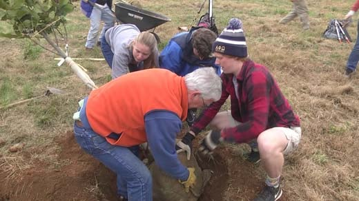 People planted trees at East McIntire Park
