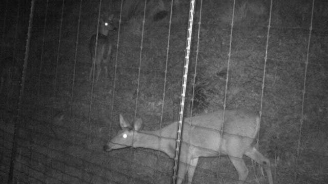 The number of crashes involving deer has fallen to zero
