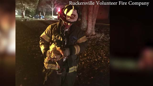 Fire crews were able to rescue a dog and a rooster