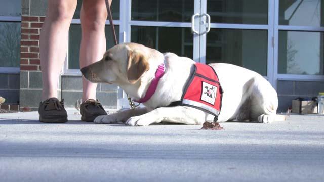Service Dogs of Virginia