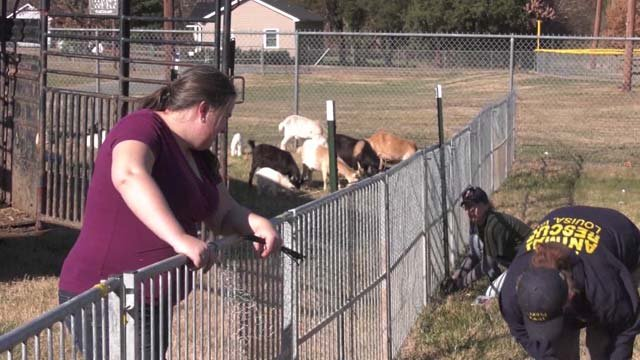 A farm in Louisa County was home to over 500 animals