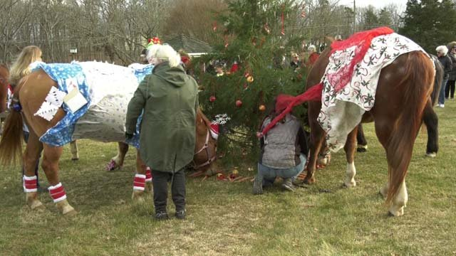 Holiday Horse event at Oakland School