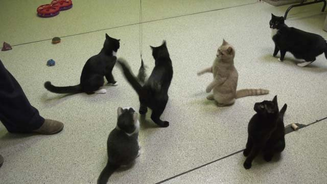 The shelter currently has 179 cats
