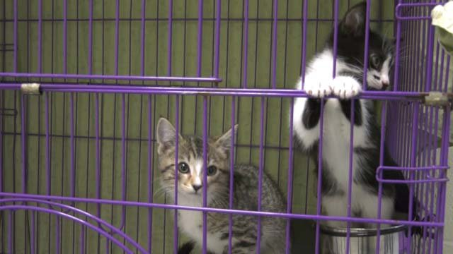 The CASPCA has over 100 cats looking for a home
