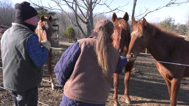 Serenity Farm Equine Sanctuary in Louisa County