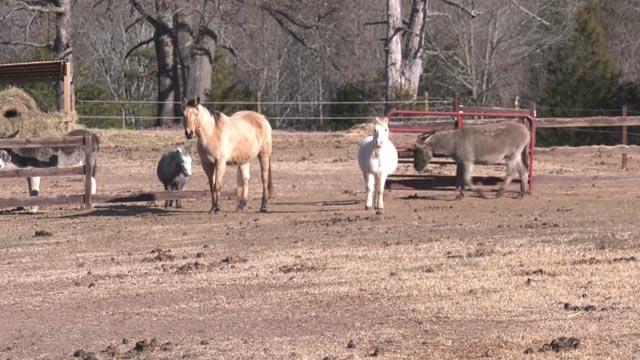 Animals at Serenity Farm Equine Sanctuary