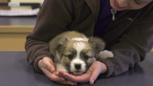 The puppies are expected to be up for adoption Feb. 10