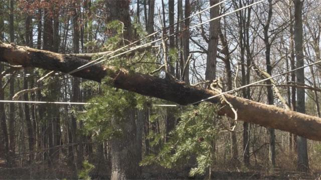 Trees down on power line is Keswick