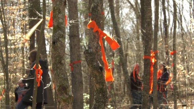 Orange ribbons tied to trees in the possible path of the proposed Atlantic Coast Pipeline in Nelson County