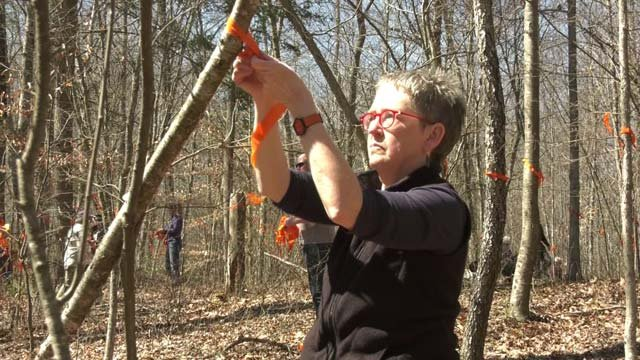 Nancy Kassam-Adams takes part in tying orange ribbons to trees in Nelson County