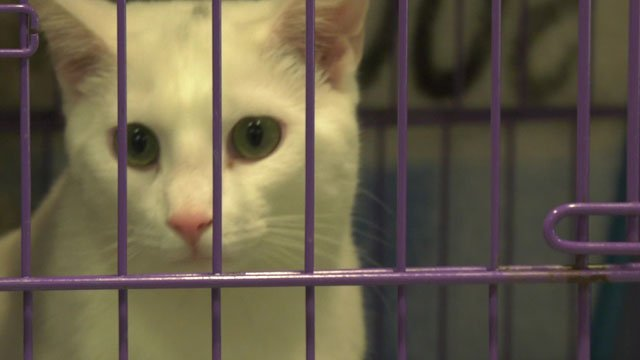 The CASPCA plans to save 500  animals in the next year