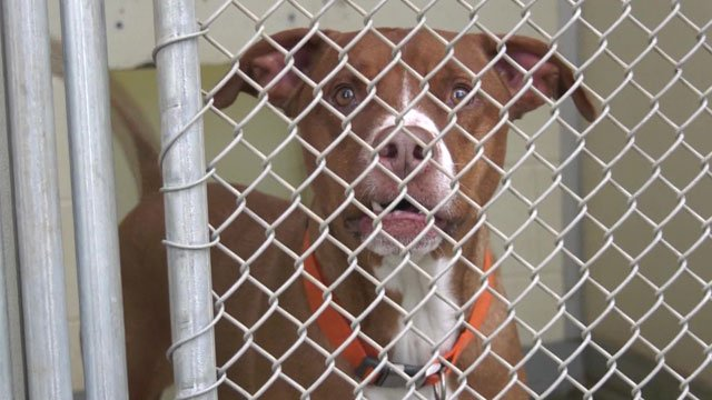 The CASPCA received a new grant from the Best Friends Animal Society