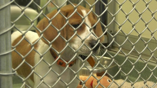 The CASPCA is looking to rely more on foster homes for these pets