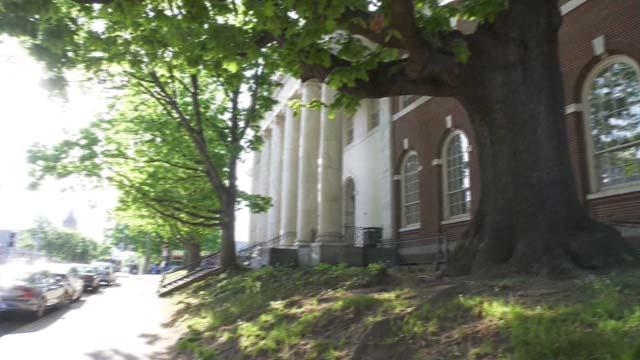 The tree outside of JMRL