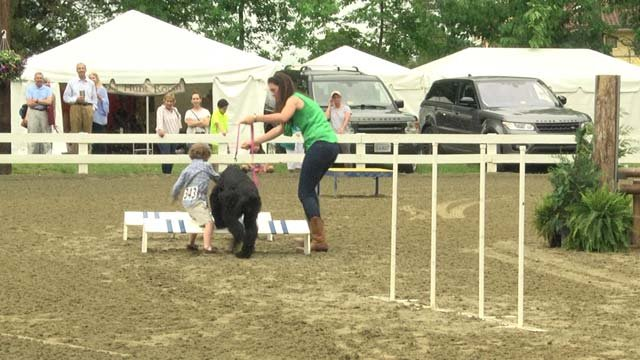 Dogs took part in agility testing and a game of musical chairs