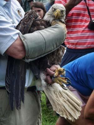Photo courtesy of the Wildlife Center