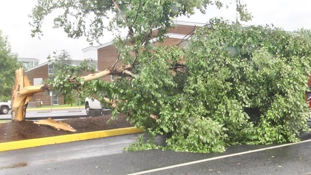 Tree at Monticello High School damaged by the storm