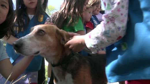 Daisy Girl Scout Troop 875 makes a visit to the Charlottesville SPCA.