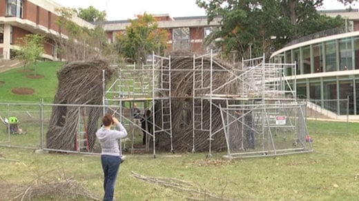 Patrick Dougherty constructs sculpture out of tree saplings and branches at UVA