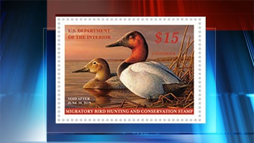 Duck stamps, photo courtesy of www.fws.gov/duckstamps/