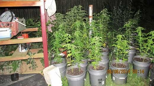 Marijuana plants found at the house