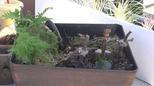 Miniature Gardens Are A New Trend And A Local Business Is Helping People  Learn How To