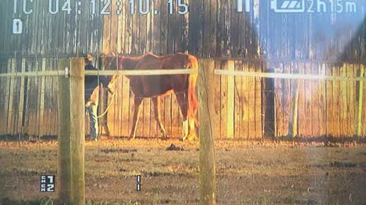 Peaceable Farm where the Sheriff's Office found 100+ living & dead horses, cats, dogs