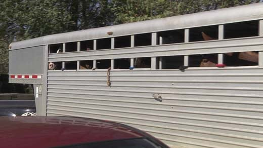 File Image: Horses being taken away from Peaceable Farm