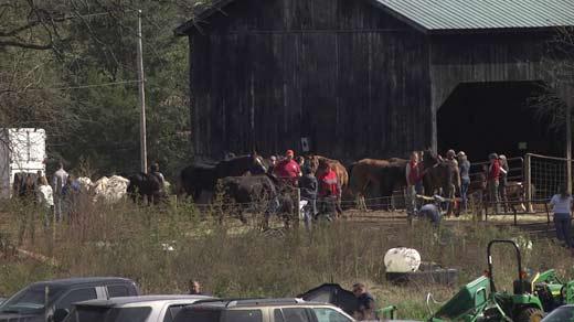 Investigators, veterinarians and animal rescuers at Peaceable Farm (FILE IMAGE)