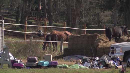 Horses taken from Peaceable Farm