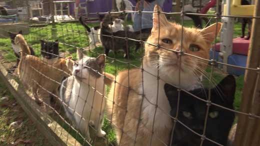 Cats at Rikki's Refuge Animal Sanctuary