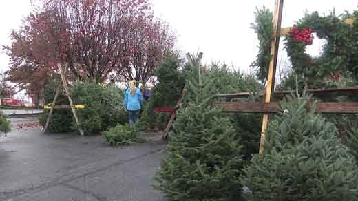 kiwanis club christmas tree sale - Christmas Trees Sale
