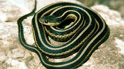 virginia general assembly approves new state snake