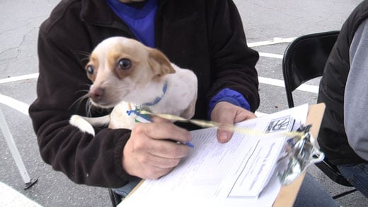 Previous clinic with the Charlottesville Albemarle SPCA