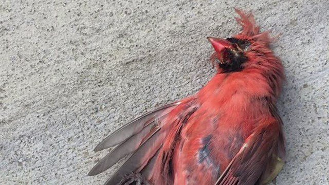 Dead bird found at Brooks Family YMCA (Photo courtesy Walker Catlett)