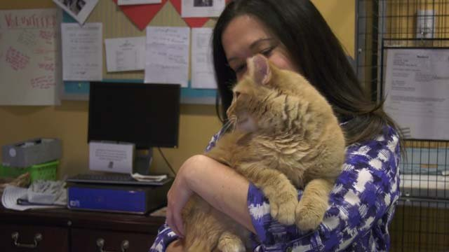 Angie Gunter and one of the cats at the shelter