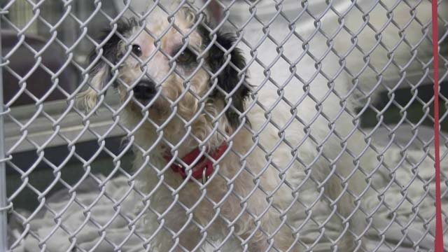 The shelter wants to free up space in case more animals need to be taken in