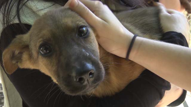 Five rescued puppies are available at the CASPCA