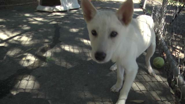 The dogs were kept in inhumane conditions in South Korea